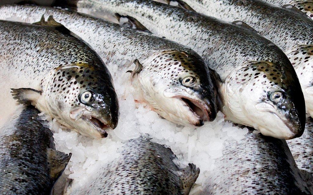 pesce-2332